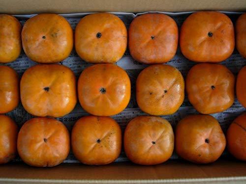 高知産次郎柿ご家庭用、甘柿、柿30〜40個入り約8kg