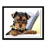 ZXXGA DIY 5D Diamante Pintura Animal Yorkshire Terrier Perro Punto de Cruz Bordado Diamante Pintura Suite Sala de Estar Dormitorio decoración Diamante Redondo 40x30cm