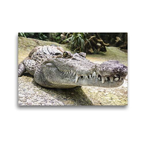 CALVENDO Premium Textil-Leinwand 45 x 30 cm Quer-Format Krokodil, Leinwanddruck von Elisabeth Stanzer
