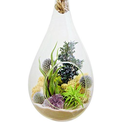 Air Plant Terrarium with Purple Amethyst