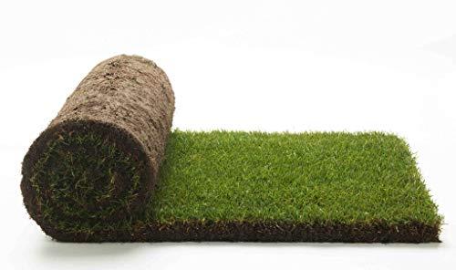 Vero prato pronto a rotoli di 10 mq 1^ scelta in erba naturale, NO sintetica sintetico (20 rotoli) per giardino