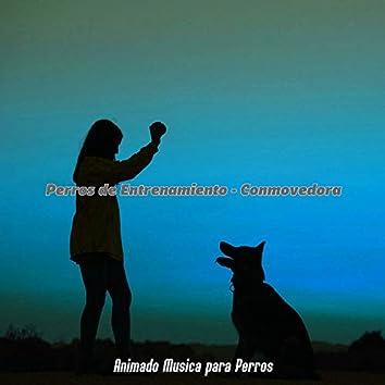 Perros de Entrenamiento - Conmovedora