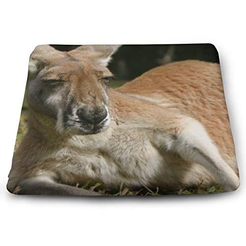 BathWang - Cojín de espuma viscoelástica para silla, diseño de canguro en Pinterest