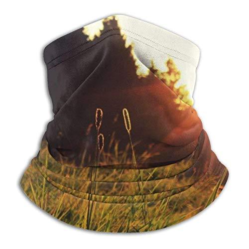 Sunset Forest Landscapes Neck Gaiter Warmer Windproof Face Shield Scarf Magic Balaclava Sports de Plein air