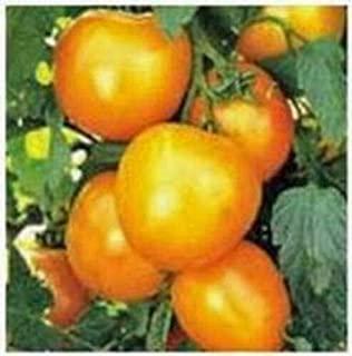 Lumos80 Tomato Garden Collection, Heirloom, Organic Seeds, Non GMO, 4 Top Varieties