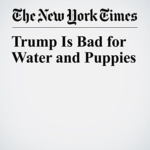 Trump Is Bad for Water and Puppies copertina