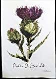 Flower Of Scotland Geschirrtuch in einem Schottische Distel Design