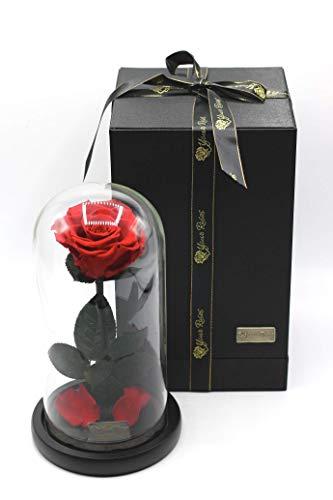 YourRoses Konservierte Infinity Rose im Glas mit Geschenkbox für Sie, Frau, Frauen, Freundin, Freund - Dekoration, Geschenk, Valentinstag, Muttertag, Geburtstag, Hochzeitstag, Weihnachten, Jahrestag