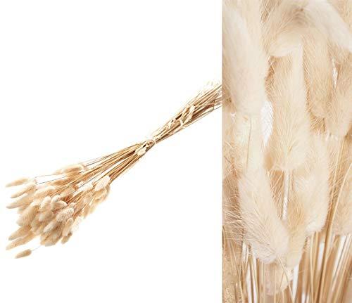 Lagurus Gebleicht - 1 Bund mit Mind. 50 Blüten - Samtgras - Echte Trockenblumen - Farbe Weiß Bleached - Natur Deko für die Vase