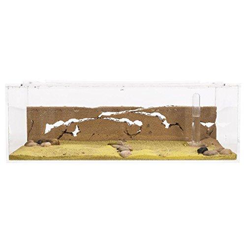 Hormiguero de Arena Grande con Hormigas Gratis (AntHouse.es)