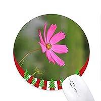 ピンクコスモス 円形滑りゴムのマウスパッドクリスマス飾り