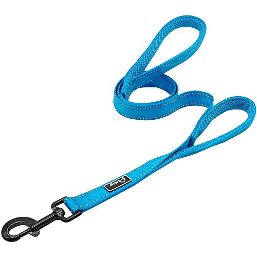 Didog 4 Feet No Pull Nylon Webbing Reflective Dog Leash,Training Dog Leash in Traffic,Blue