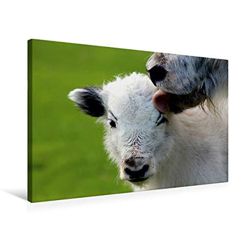CALVENDO Premium Textil-Leinwand 75 cm x 50 cm quer, Mutterliebe   Wandbild, Bild auf Keilrahmen, Fertigbild auf echter Leinwand, Leinwanddruck: ACH Mama Tiere Tiere