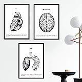 Nacnic Set de 3 Posters de anatomía en Blanco y Negro con imágenes del Cuerpo Humano. Pack de láminas sobre biología con Corazón, Cerebro y Pulmones. Tamaño A3. Sin Marco.