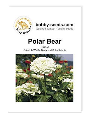 Polar Bear Zinnie von Bobby-Seeds Portion