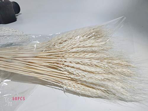 OYPY 7Pcs Bulrush natürliche getrocknete Blumen Kleine Pampasgras Phragmites DIY künstliche Blumen Pflanzen for Dekor-Start Hochzeit Dekoration (Farbe : Weiß)