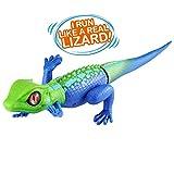 Big Lizard Pets