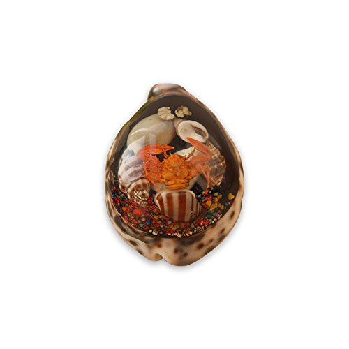AILINDA Conchas de ámbar natural con cáscara de cangrejo Waldorf regalo paisaje decoración jardín hecho a mano regalo