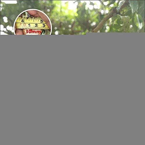 TYX-SS Tijeras de podar eléctricas 21V Inalámbrica Fuerte Hoja de Acero Cortadoras de jardín Tijeras de podar con 2 baterías de Litio para árboles frutales de Manzana Rosa
