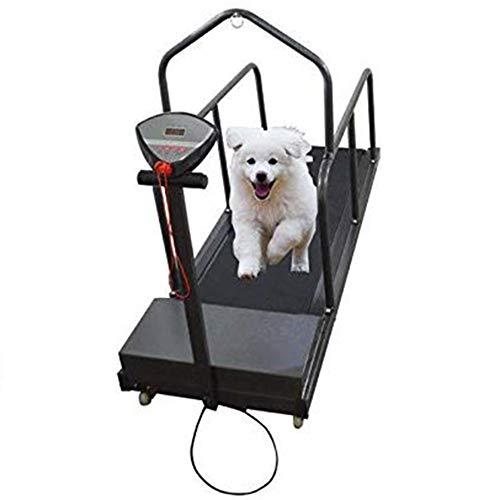 Dog Treadmill Pet Exercise Equipment for Canine Running Pet Treadmill Animal Treadmill Dog Supplies Puppy Treadmill
