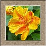 6: Pure white Jasmin samen zimmerpflanzen mehrjährige blumensamen China Mainland 100% echte...