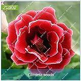Il pacchetto di articoli ha quantità: 1 Tipo di unità: lotto (100 pezzi / lotto) peso del pacco: 0,01 kg (0,02 libbre)formato del pacchetto: 10 cm x 10 cm x 1 cm (3,94 x 3,94 x 0,39 poll. ) periodo di piena fioritura: primavera tipo: fioritura piant...