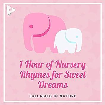 1 Hour of Nursery Rhymes for Sweet Dreams