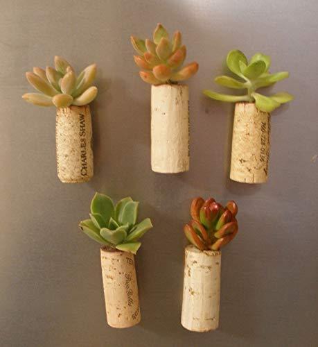 Small succulent cork planters