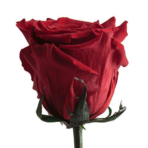 Infinity Rose einzeln mit Stiel lang haltbar 3 Jahre konservierte Rose die eine Ewigkeit blüht für Hochzeitstag - haltbare Rose Rot (Rot)