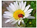 Yqgdss Ladybug On Small Daisy Flower 1000 Piezas Rompecabezas DIY para Niños Adultos Juguetes Educativos Regalo Arte Artesanía Descompresión Relajarse Aburrido