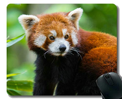 Yanteng Gaming Mouse Pad mit genähtem Rand, Lakritze Wildlife Panda, Mouse Mat, Rutschfeste Gummibasis Mousepad für Laptop, Computer