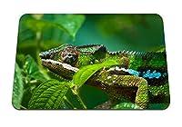 26cmx21cm マウスパッド (カメレオン爬虫類色明るい) パターンカスタムの マウスパッド