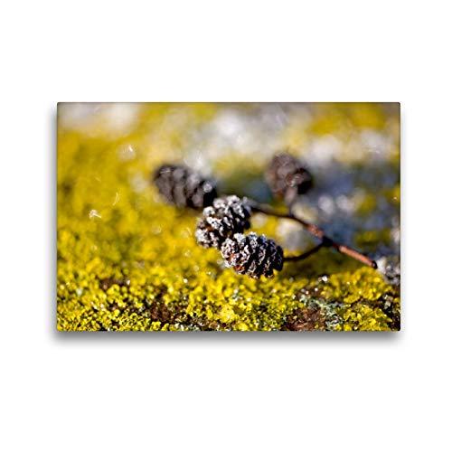 CALVENDO Premium Textil-Leinwand 45 x 30 cm Quer-Format Eiskristalle an Zapfen und Flechten, Leinwanddruck von Bild-erzaehler