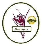 Alcachofera Hierba Natural 1000 grs - Alcachofera para Infusión Natural 1 Kg