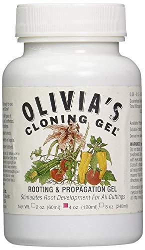 Olivia de Solution Ocg4 Olivia de 113,4 Gram de Gel de clonage pour Plantes