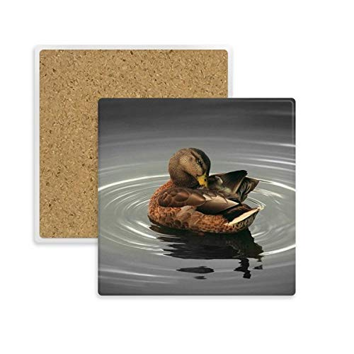 DIYthinker Swan Animal Photographie Organisme Place Coaster Tasse Porte Absorbent Pierre pour Le Cadeau de Boissons Multicolor