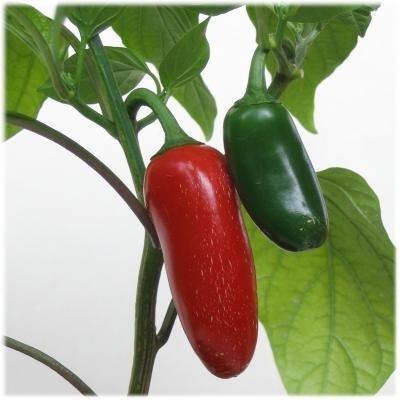 75+ Jalapeno Pepper Seeds- Heirloom Variety by Ohio Heirloom Seeds- 2020 Seeds
