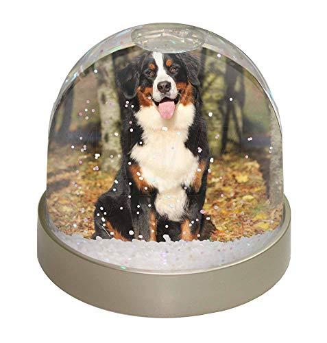 Advanta Berner Sennenhund Schneekugel Snow Dome Geschenk, Mehrfarbig, 9,2x 9,2x 8cm