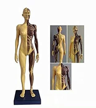 ALKITA 30CM Human Anatomical Anatomy Skull Head Body Muscle Bone Resin Model Female Golden