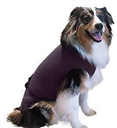 Australian Shepherd wearing a Surgi Snuggly Dog Recovery Suit.