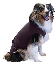 Hundekegel - Die beste Wahl für Ihr verletztes Haustier