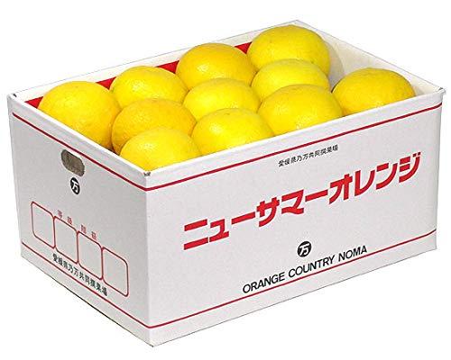 ニューサマーオレンジ (日向夏・小夏みかん)贈答用 約5kg
