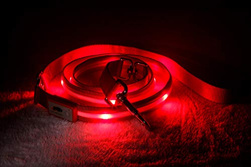 Blazin' Safety LED Dog Leash