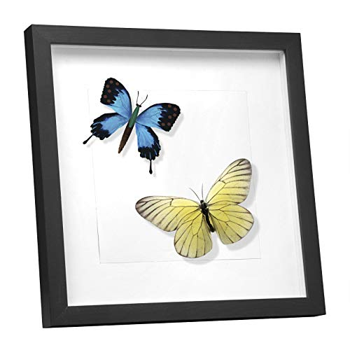 EUGAD e809 Bilderrahmen Fotogalerie, Holzrahmen mit Papier-Passepartout, mit Glasscheibe, 3D Objektrahmen, Schwarz, 40x40cm