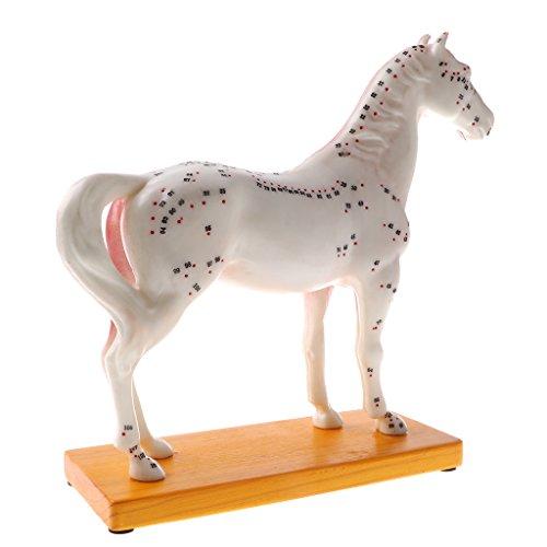 Homyl Pferd Akupunktur Anatomisches Modell mit 114 Akupunkturpunkten für Anatomie Hilfsmittel