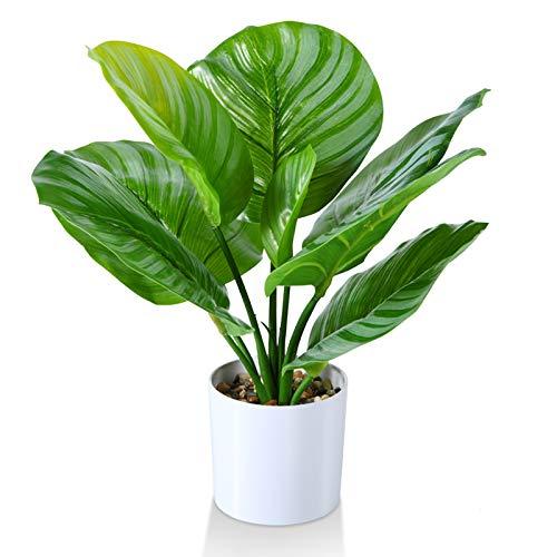 Kazeila Mini Topf gefälschte Pflanzen, 40 cm Zoll künstliche Calathea Orbifolia Pflanze für Home Office Hotel Bookstore Cafe Moderne Dekoration
