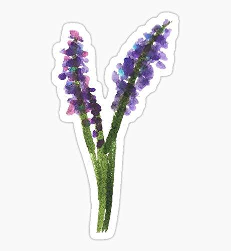 Lavender Flower Sketch Sticker - Sticker Graphic - Waterbottles, Hydroflask, Laptops, Notebooks, Cell Phones, Bumpers, Windows, Locker Sticker