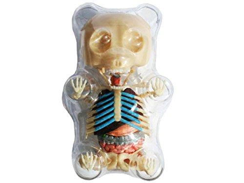 4D Master Gummi Bear Skeleton Anatomy Model Kit, Clear