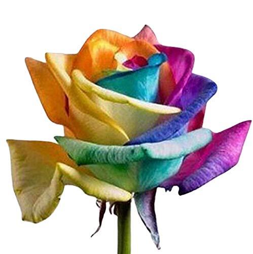 TOYHEART 100 Piezas De Semillas De Flores De Primera Calidad, Semillas De Rosas Arcoíris, Plantas De Semillero De Flores De Jardinería Doméstica Anual Aromáticas No Transgénicas Para Balcón Mu