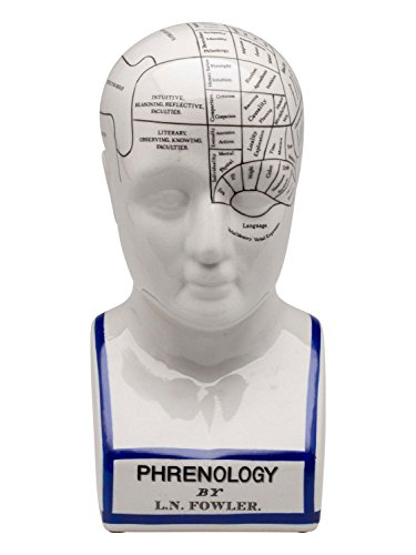 Aubaho Ampliación 30cm Busto Cabeza frenología anatomía